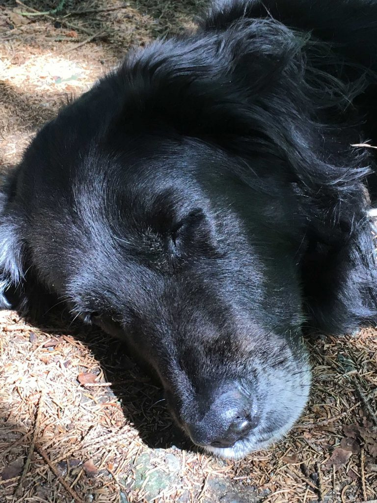Schlafender Blixa am Amelufer