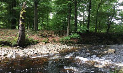 Das Hilltal mit dem Fluss Hill