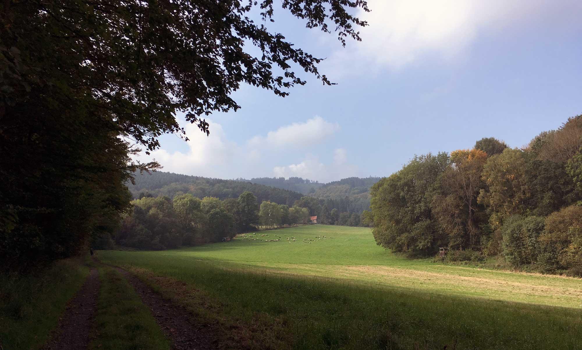 Blick über ein weites Feld nach Bäingsen
