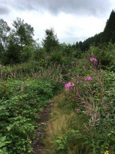 Der Weg am Amelufer