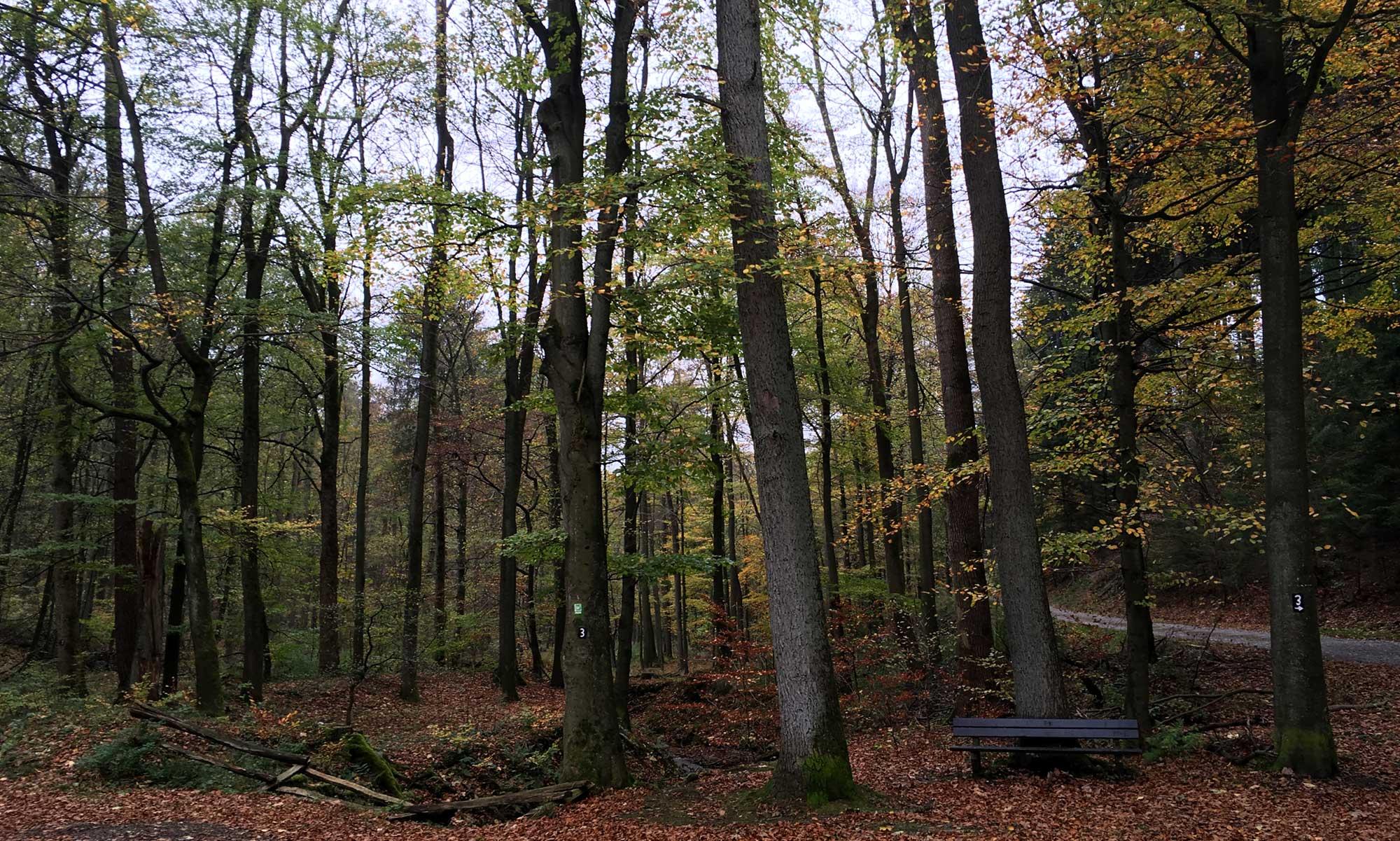 Iserlohner Stadtwald Bäume