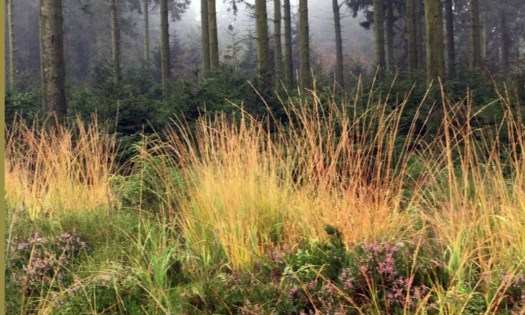Nebel im Wald, Licht auf dem Moor