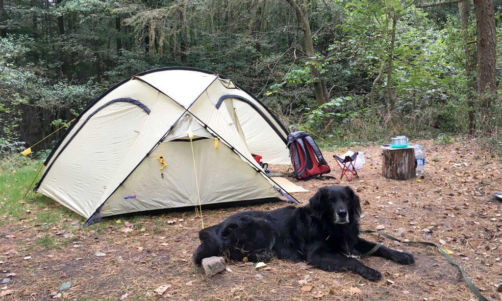 Kuppelzelt und Hund