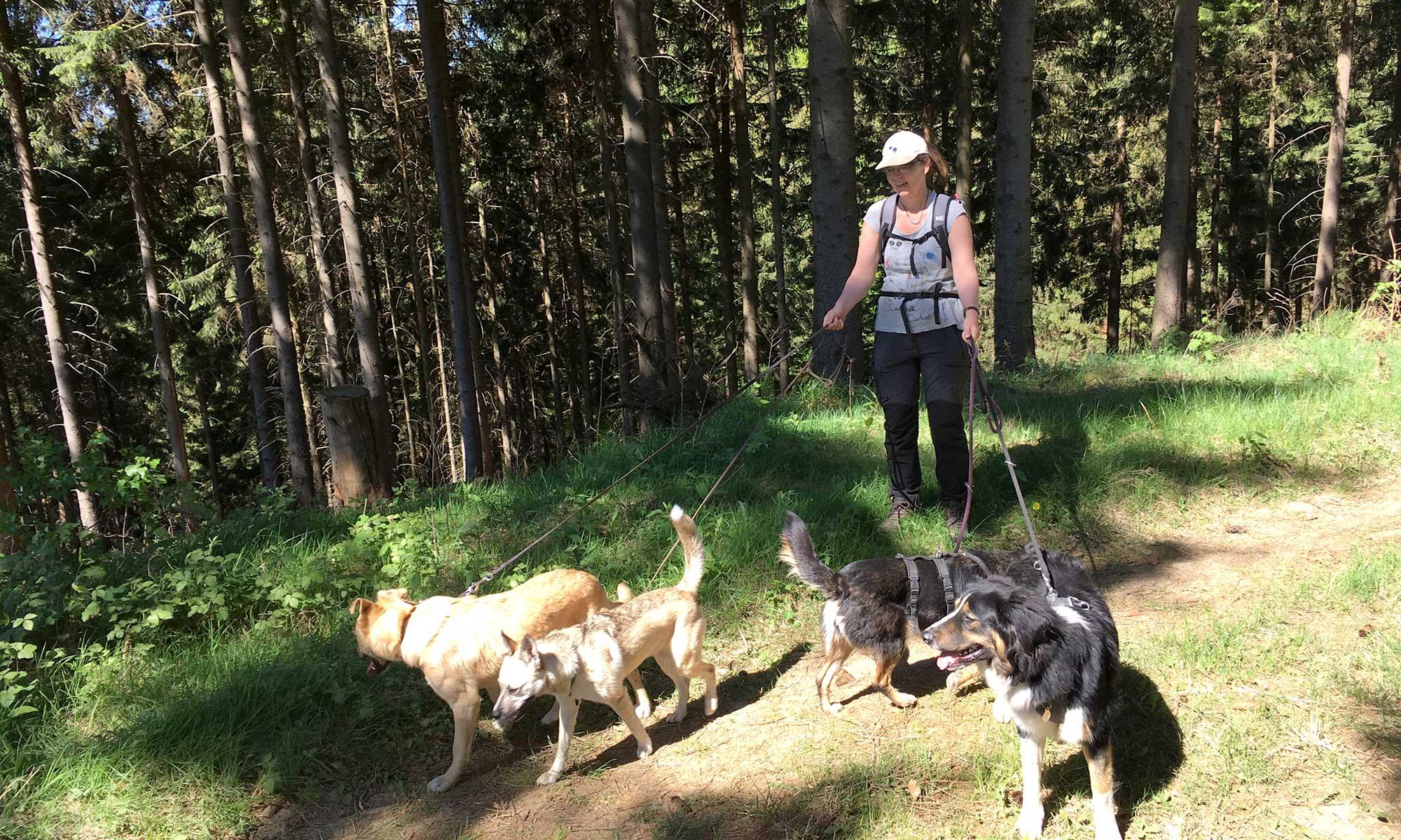 Sauerländer Waldroute Plackweg und Hunde
