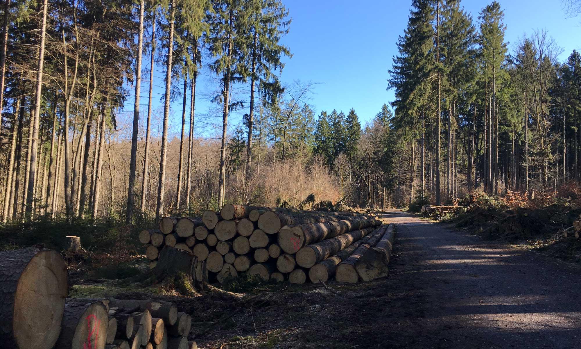 Rennweg Waldweg im Klangwald