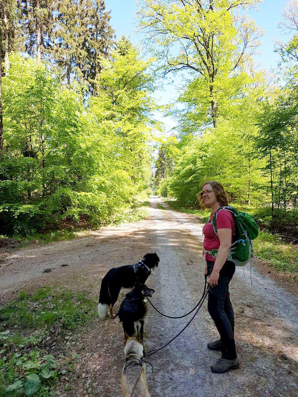 Sauerländer Waldroute Knickerweg ich mit Hundis