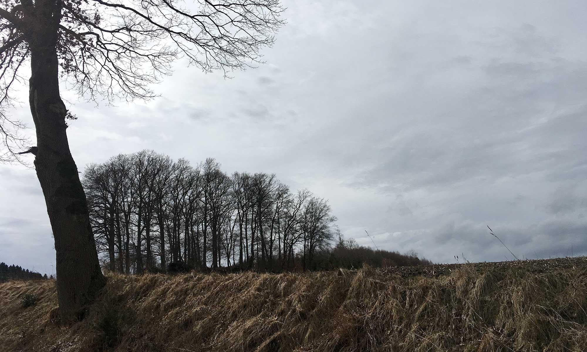 Langenholthausen Felder am Christine Koch Weg