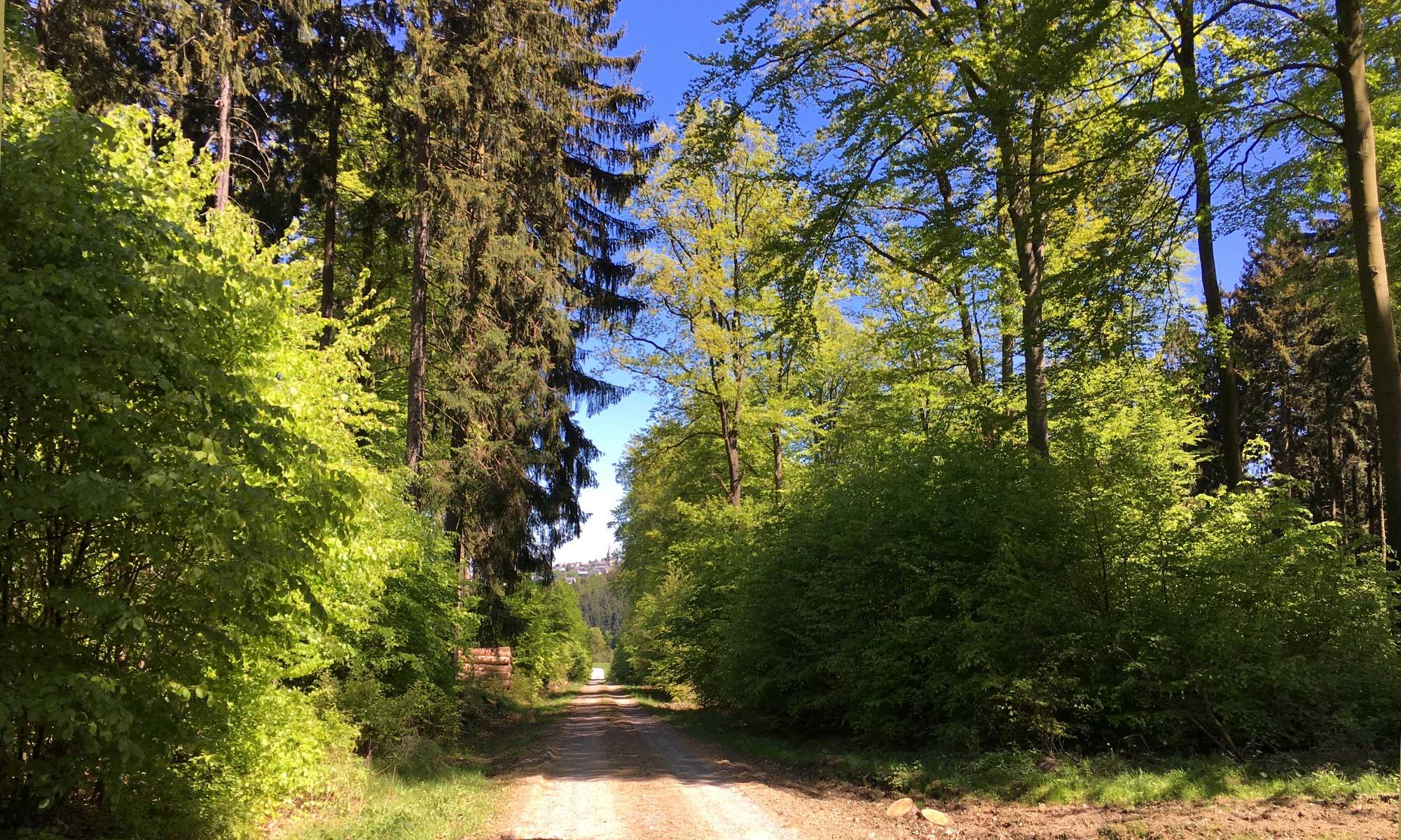 Sauerländer Waldroute Knickwerweg Hirschberg
