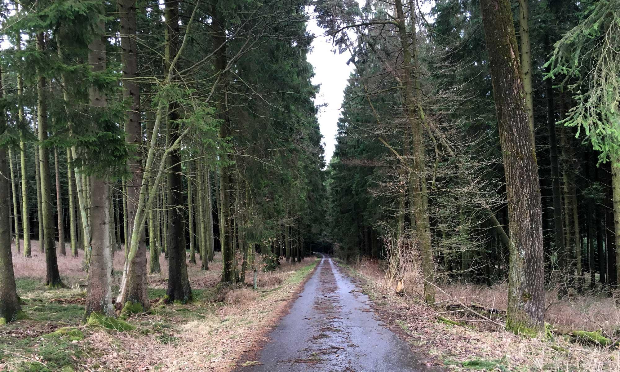 Affeln Waldweg Christine Koch Weg