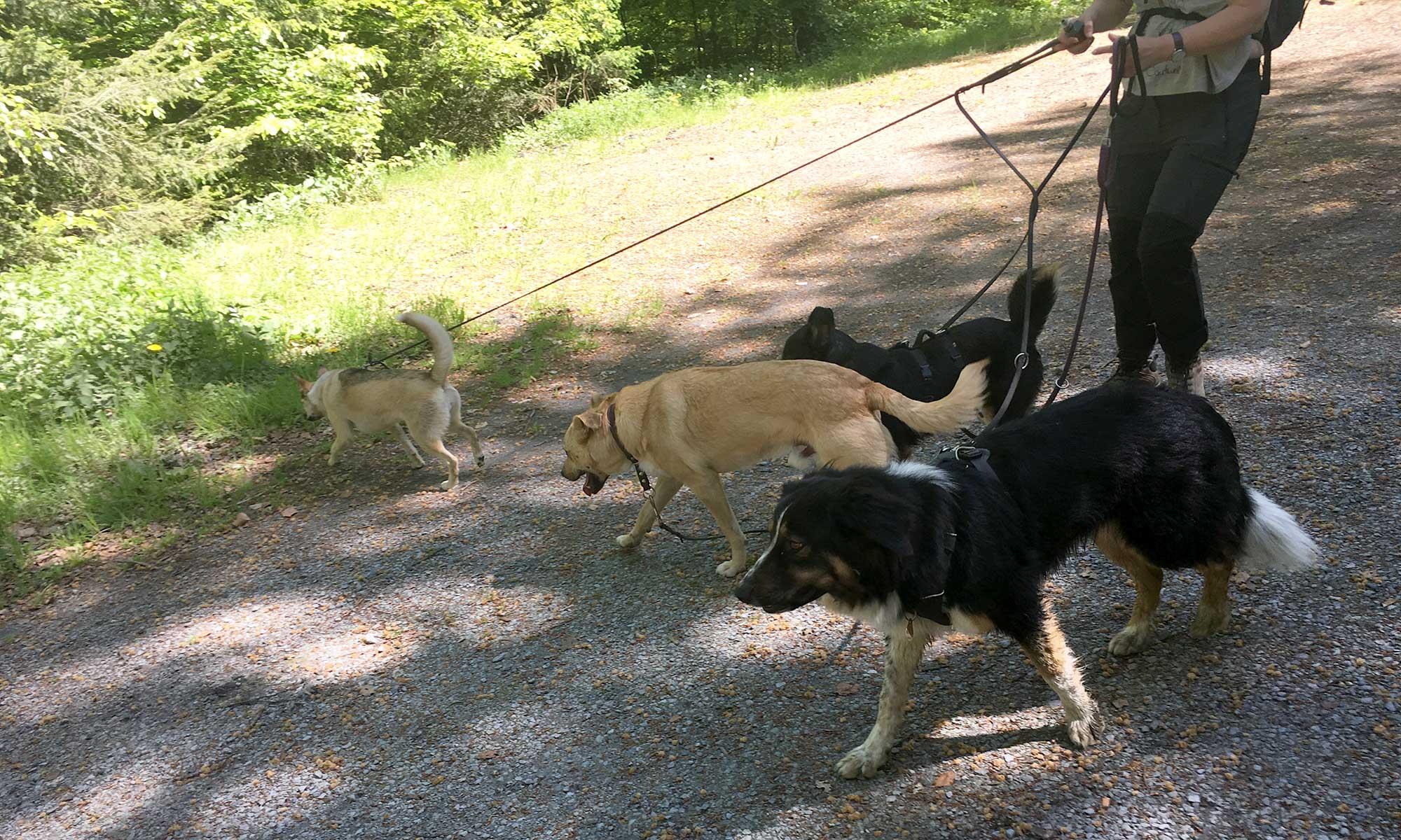 Sauerländer Waldroute Hirschberg Kohlenmeiler und Hunde