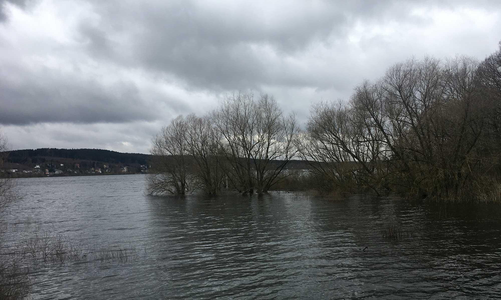 Bäume im Wasser am Ufer der Möhne Talsperre