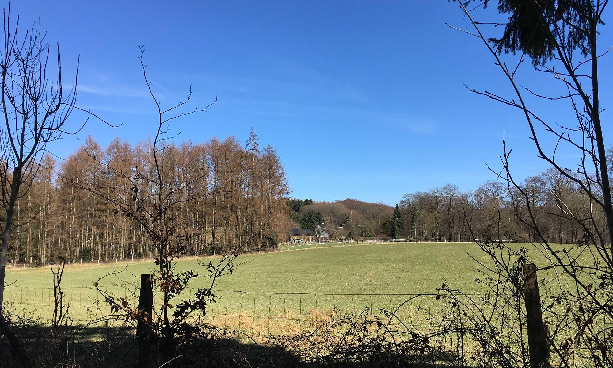 Lattenberg Waldwiese