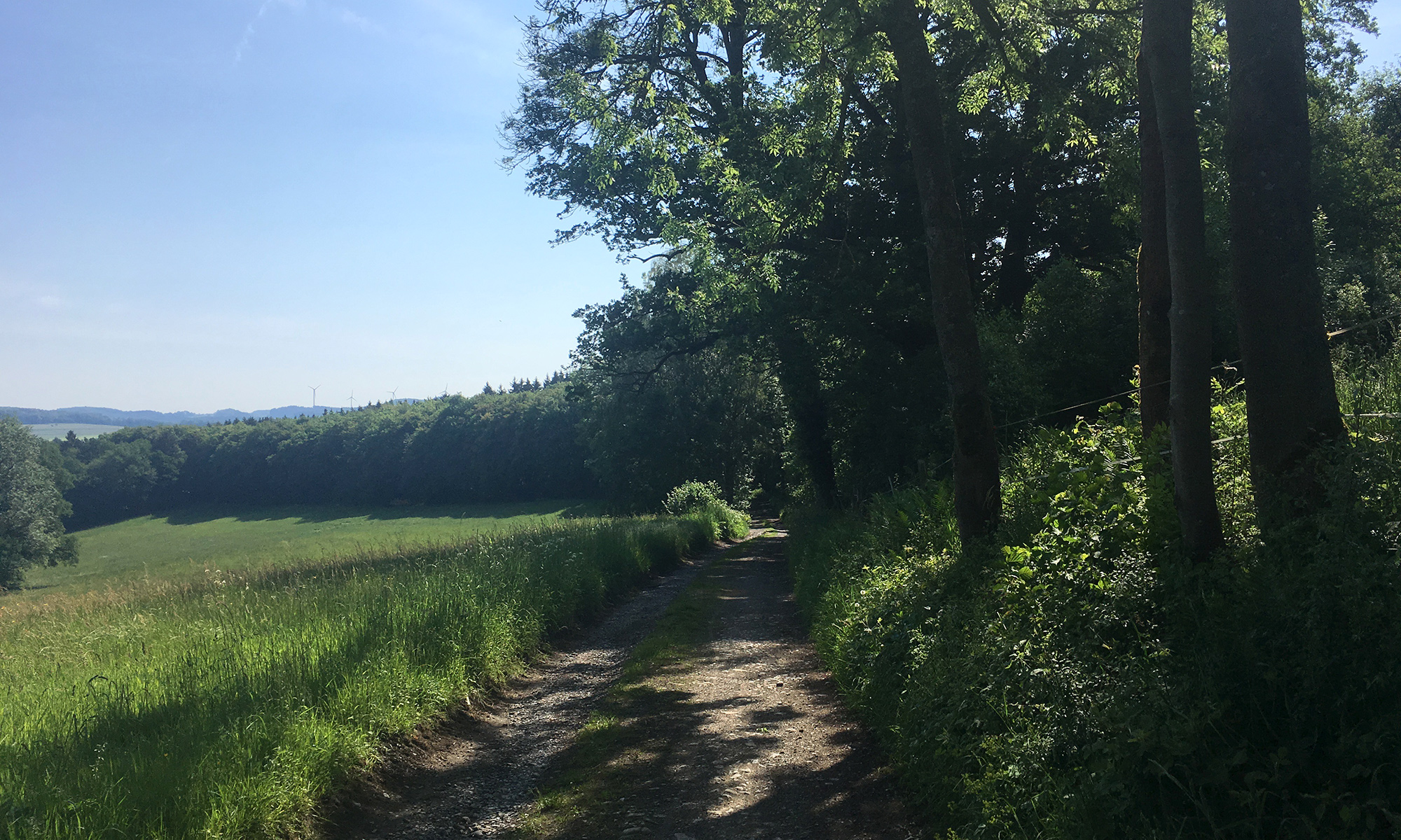 Waldroute bei Brockhausen