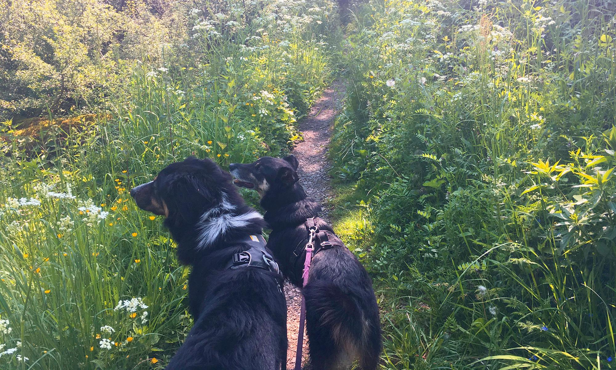 Waldroute bei Binolen