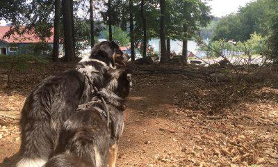 Hundis und Ankunft am Sorpesee