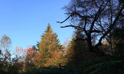 Wald um Longfaye mit herbstlicher Färbung