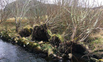Flowerdale River in springtime