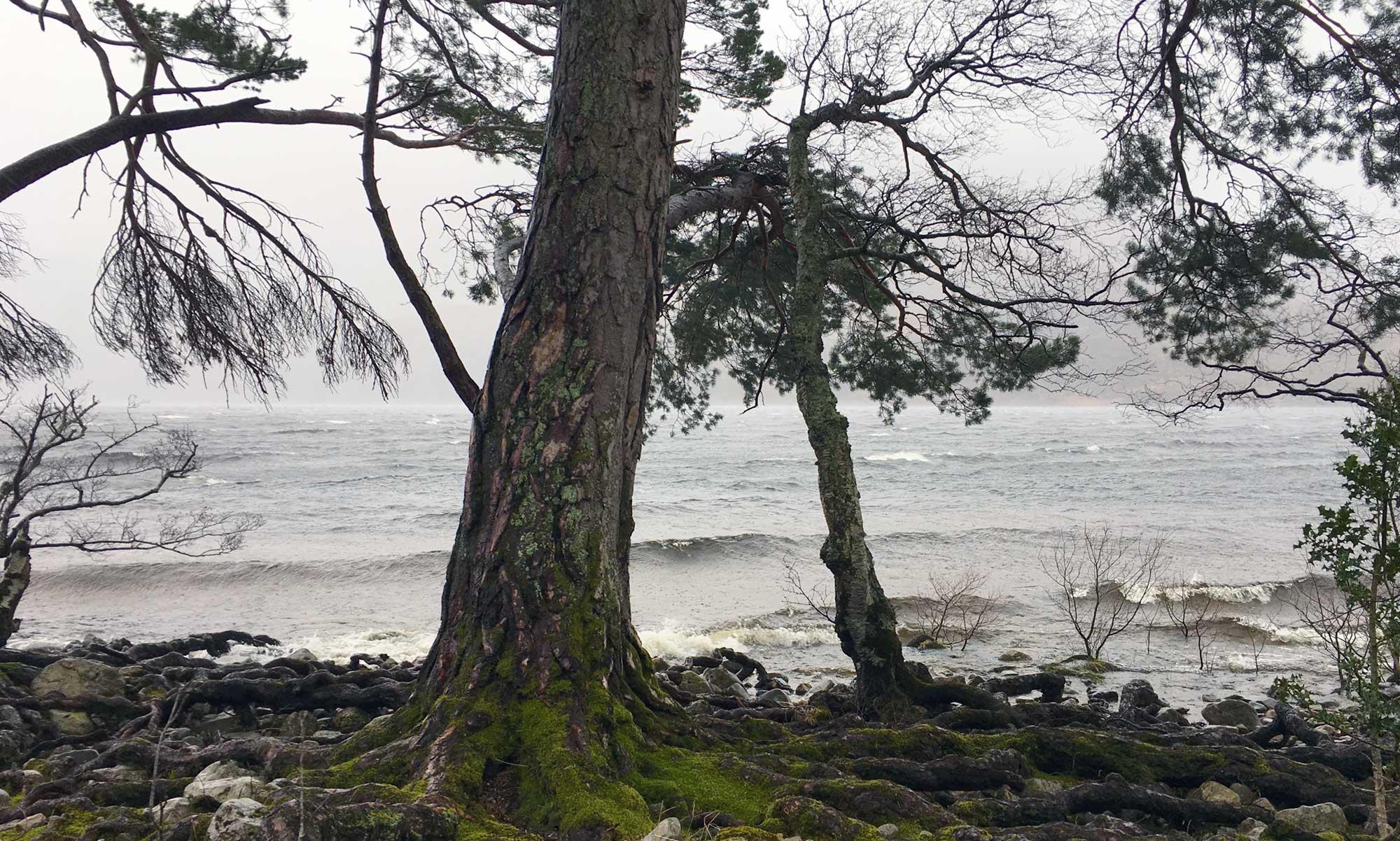 Loch Maree und starker Wind