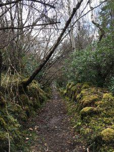 Im Wald bei Plockton