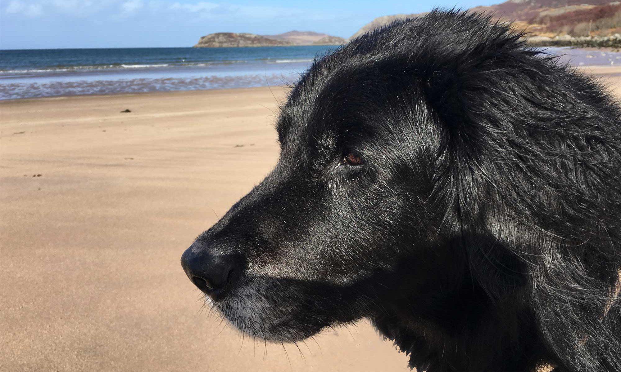 Blixa am Gruinard Beach