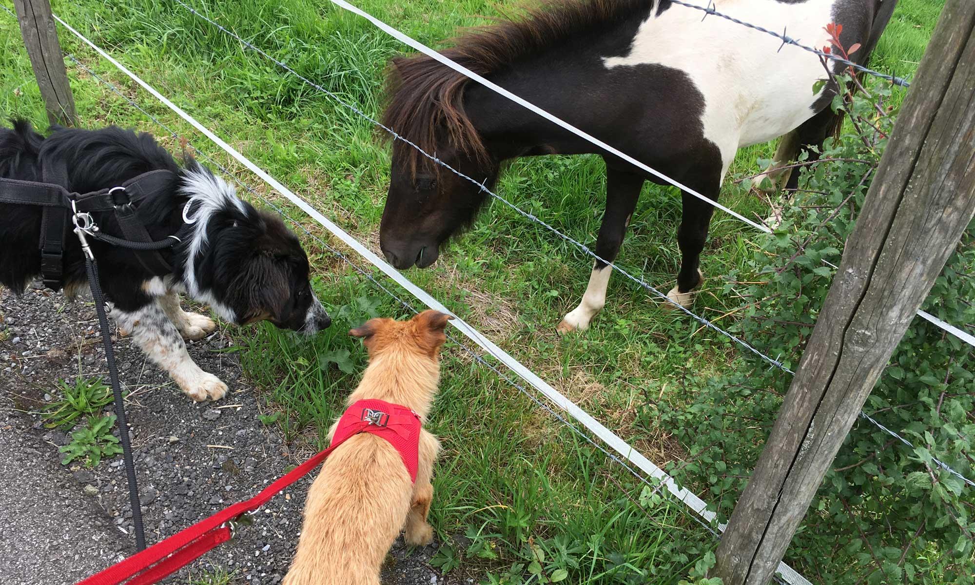 Zwei Hunde und ein Pferd