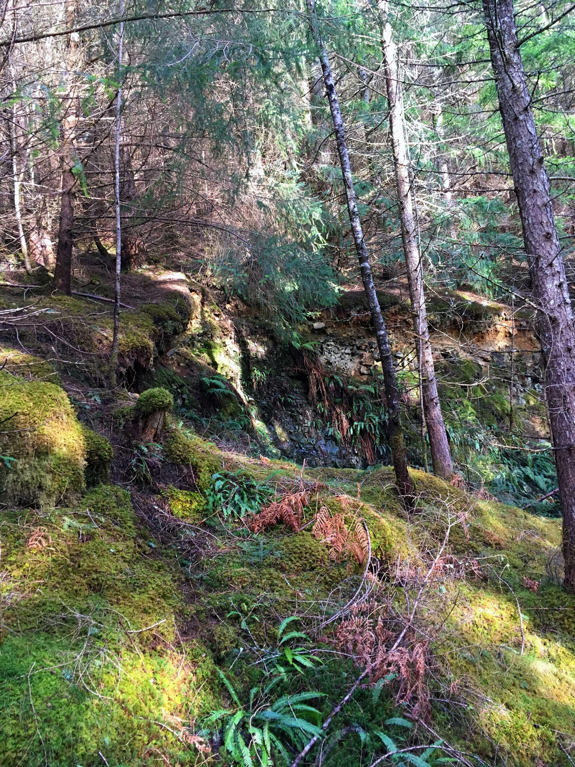 Lael Forest Garden