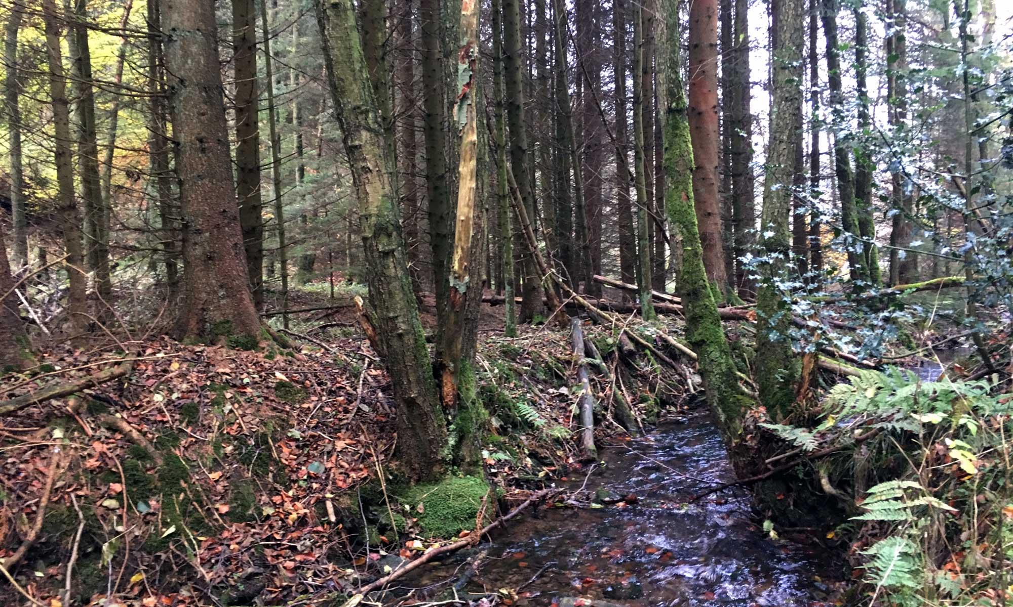 Sauerländer Waldroute Bach bei Stephanopel