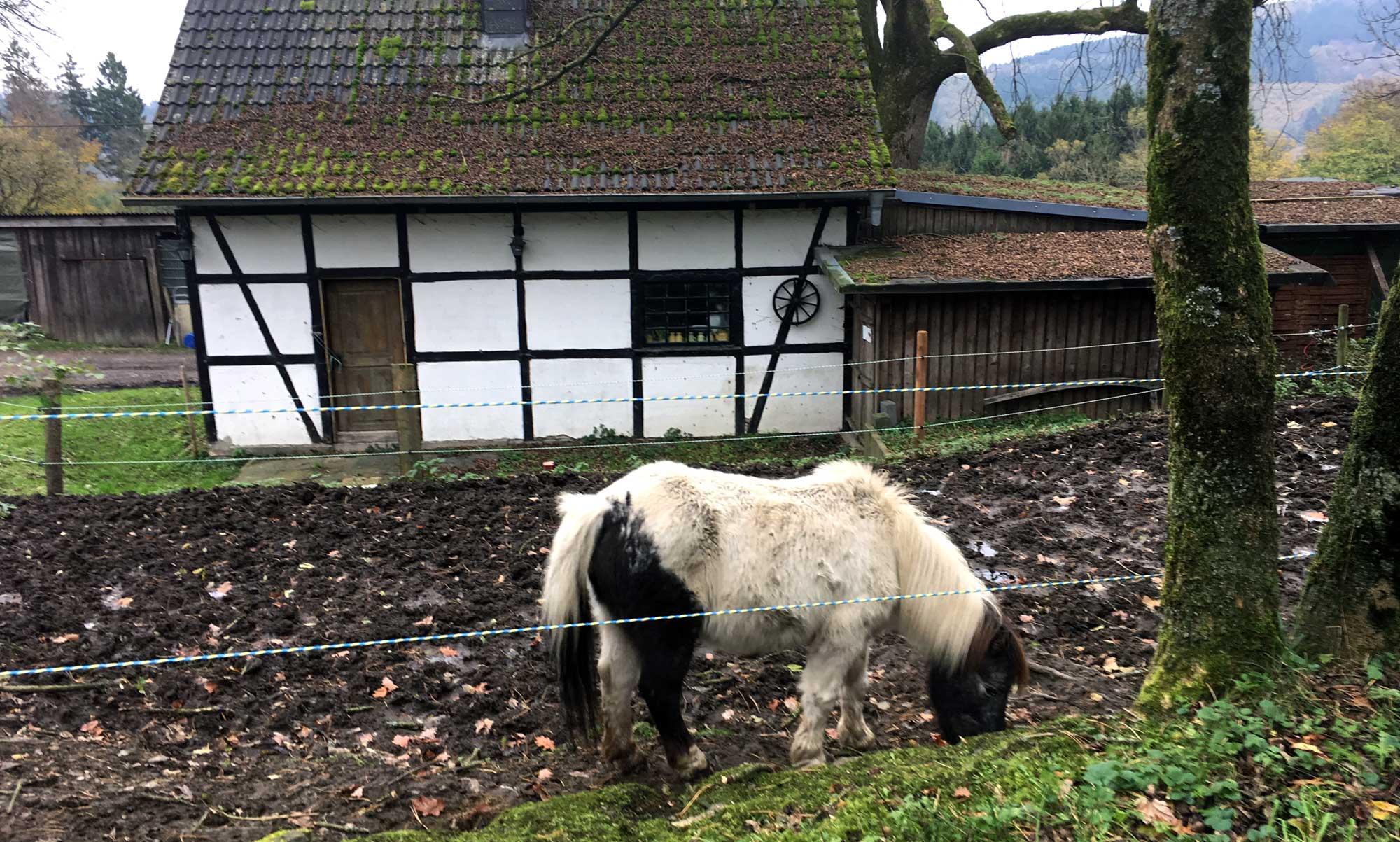 Sülberg 1 Pony