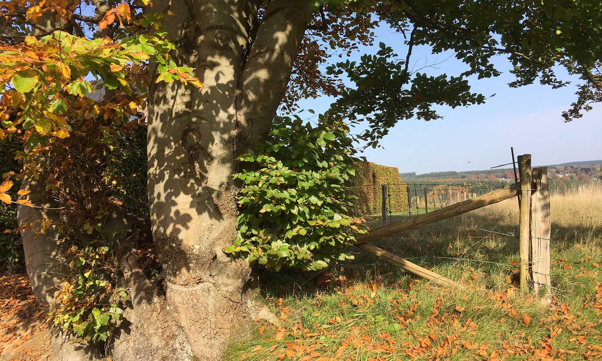 Baum mit Wiese bei Xhoffraix