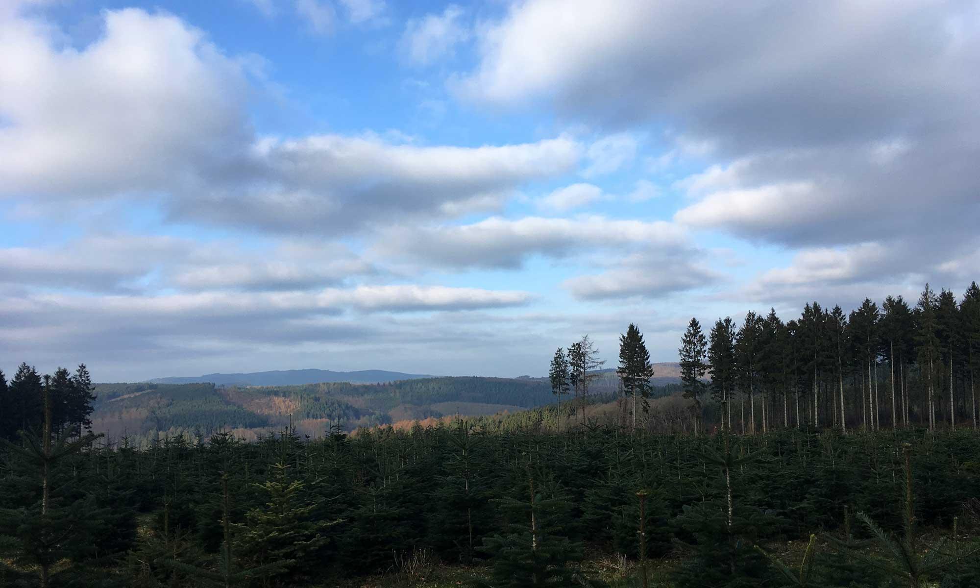 Blick über das Tal der Sorpe