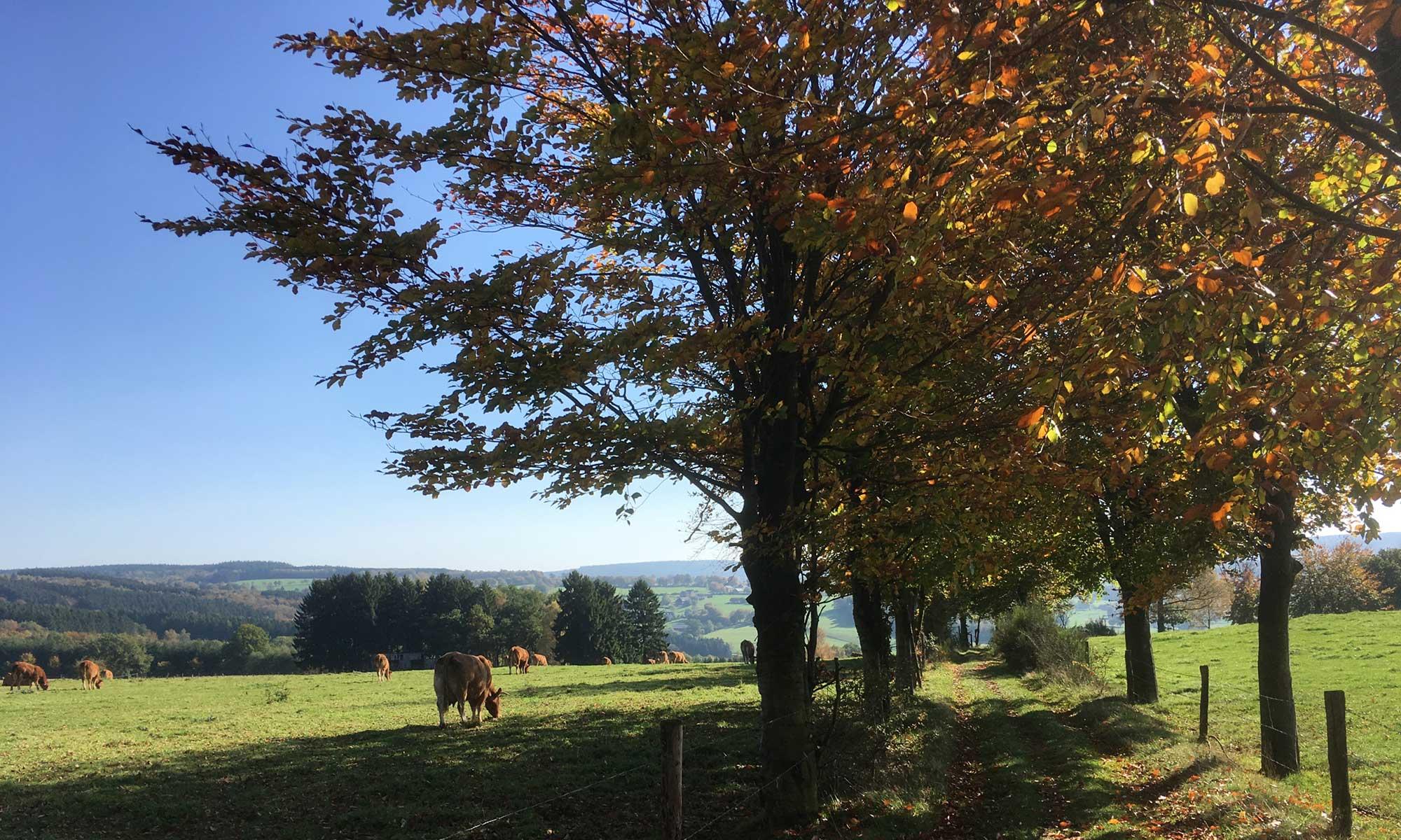 Ausblick mit Kuh oberhalb von Bellevaux