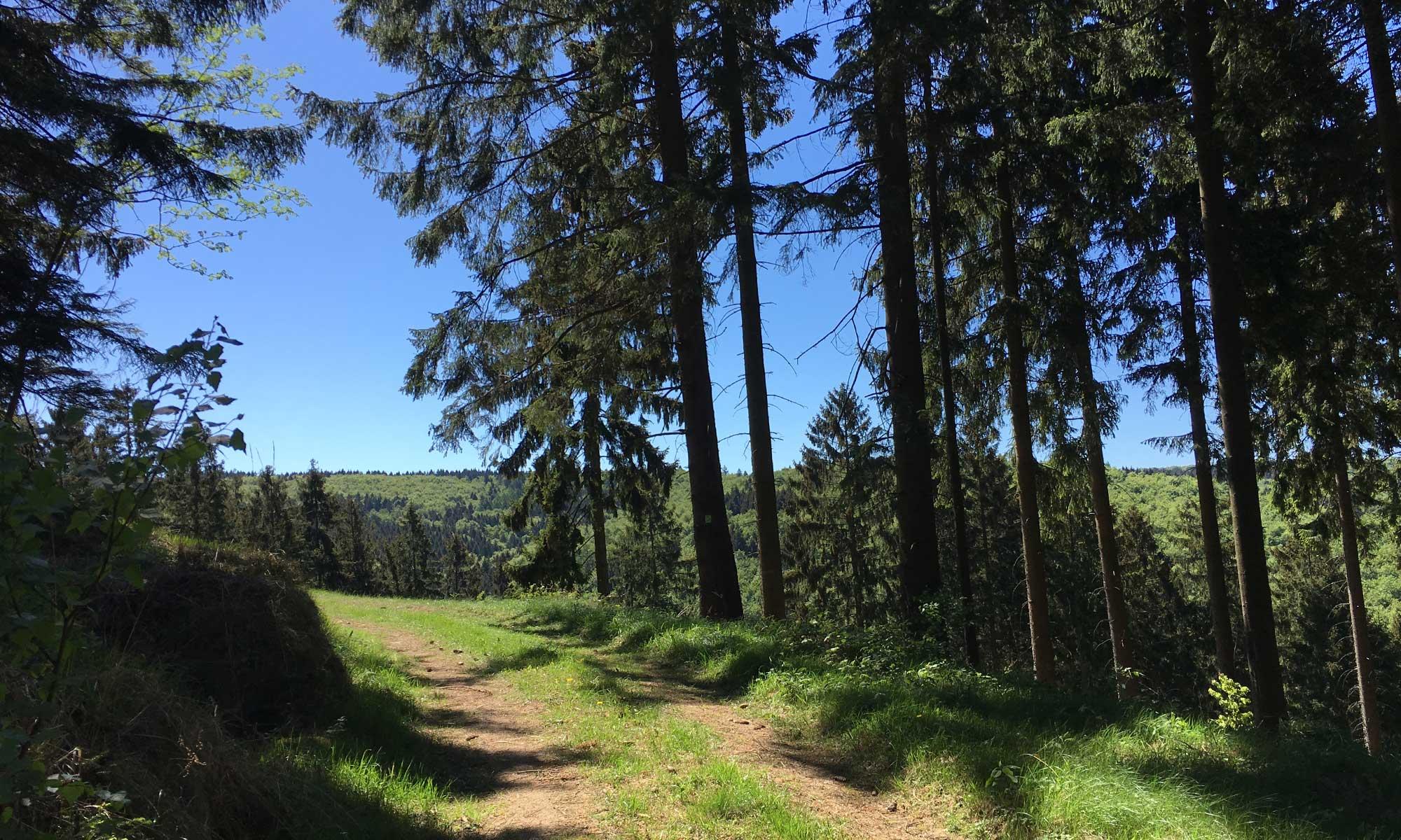 Sauerländer Waldroute Plackweg nach Lattenberg