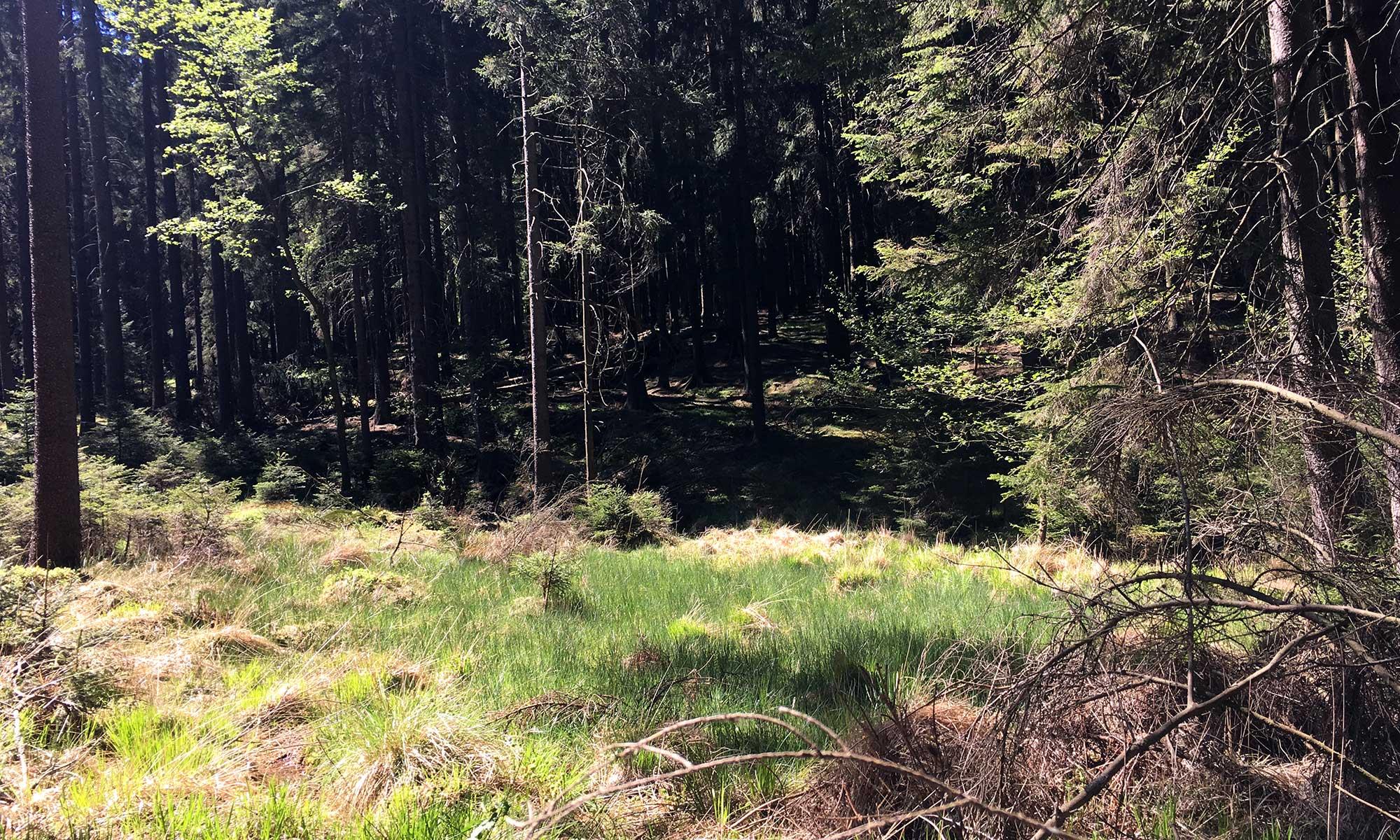 Sauerländer Waldroute Knickerweg Bachaue