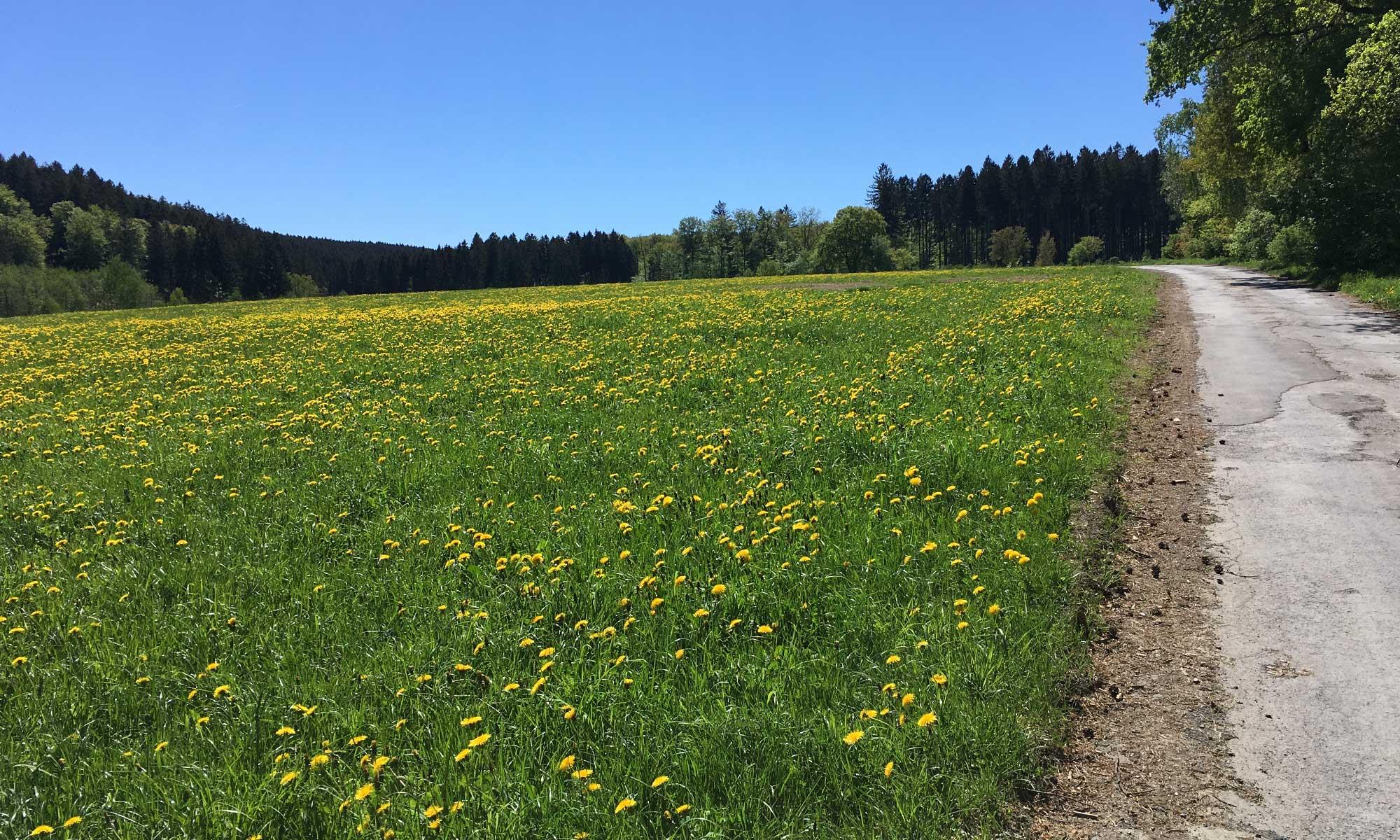 Sauerländer Waldroute Knickwerweg Hirschberg Wiesen