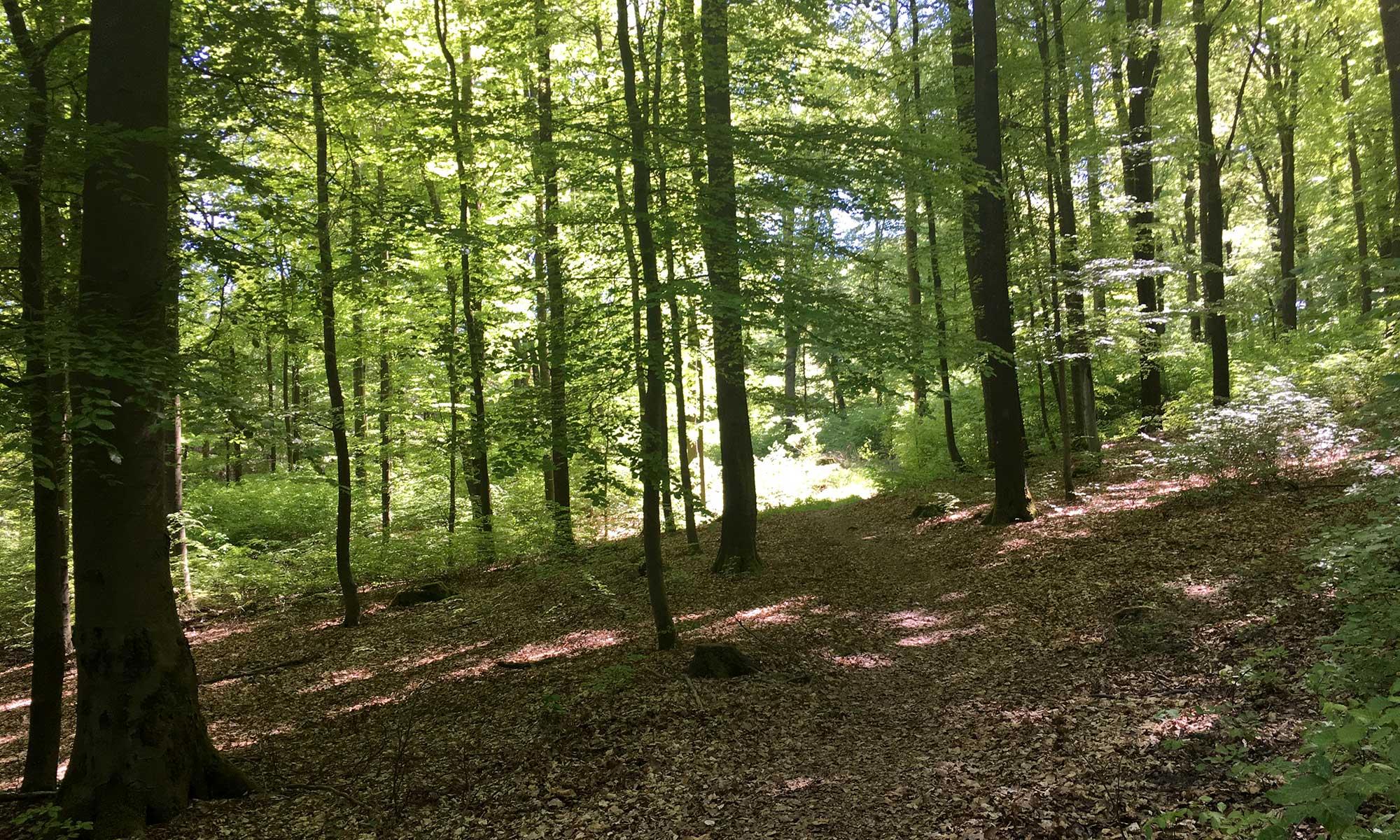 Sauerländer Waldroute Hirschberg Laubwald