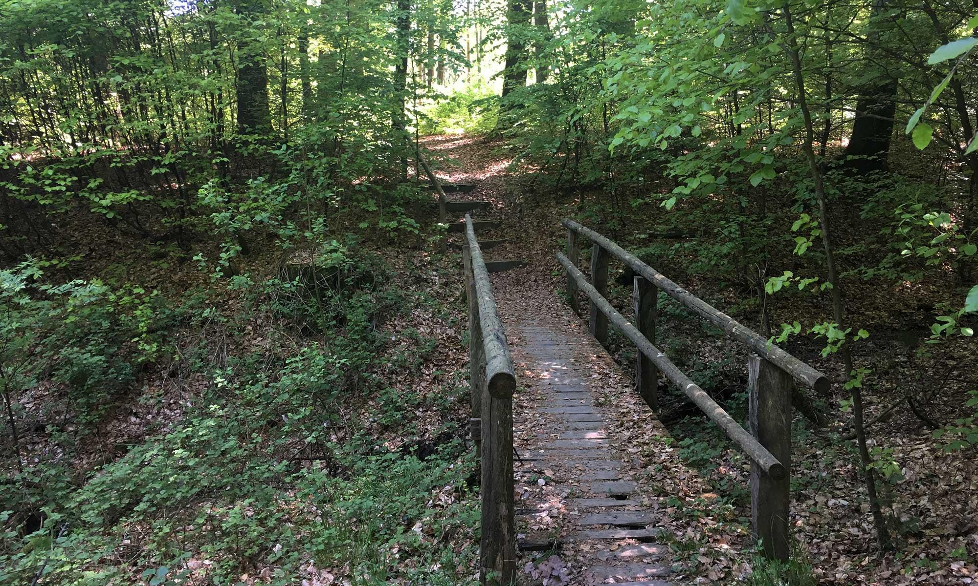 Sauerländer Waldroute Hirschberg Holzbrücke