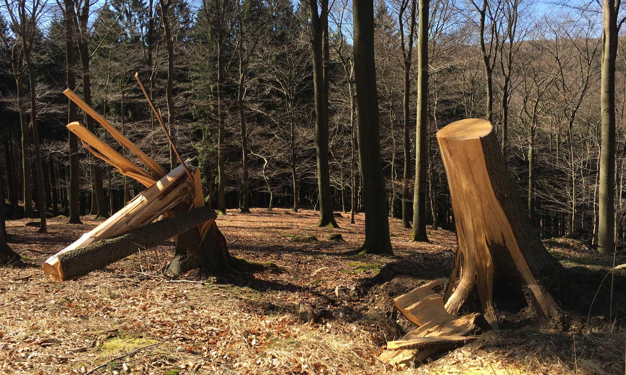 Abgenickte Baumskulpturen