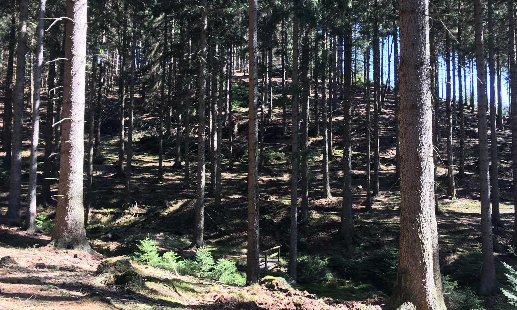Im Wald oberhalb der Schmalenau