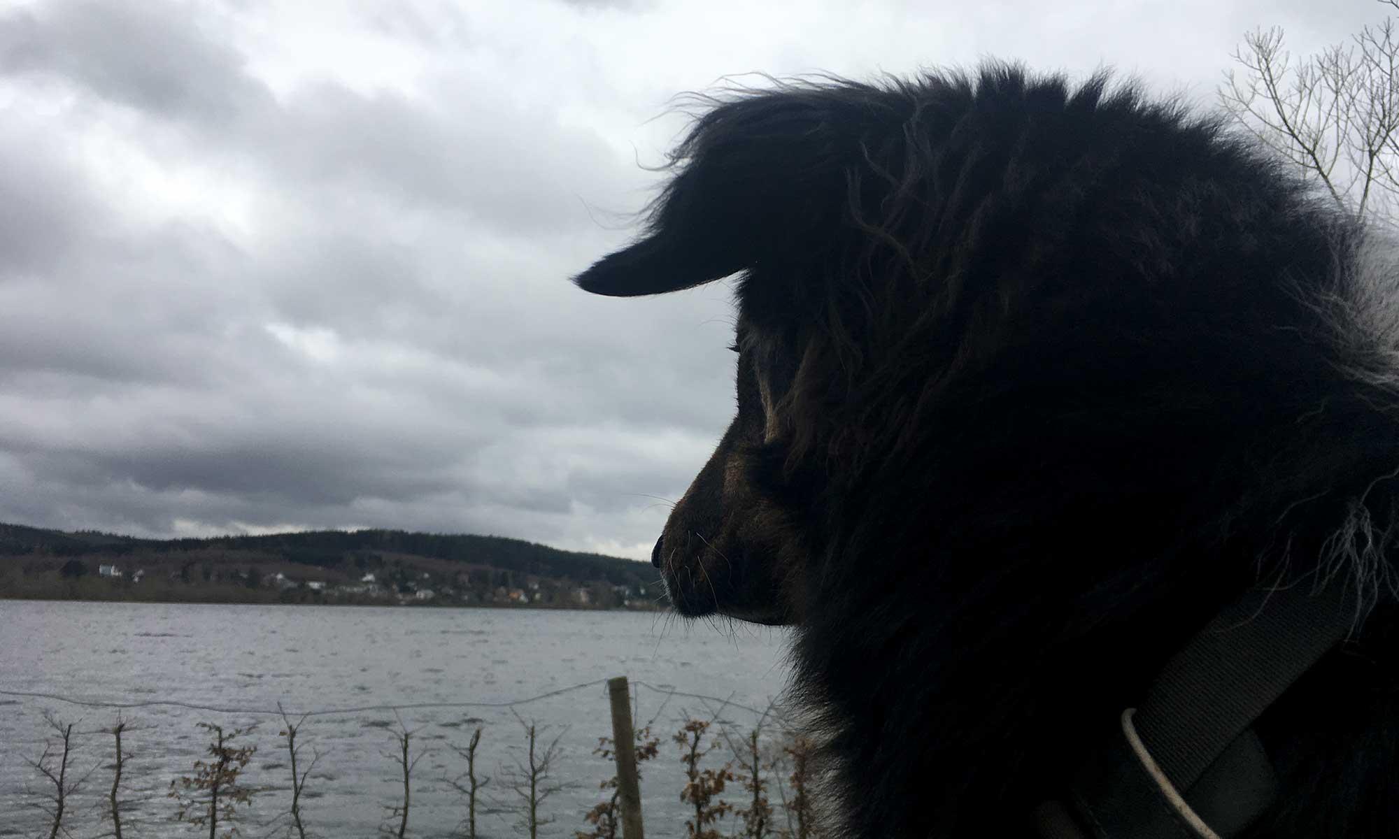 Mozart schaut über das Wasser
