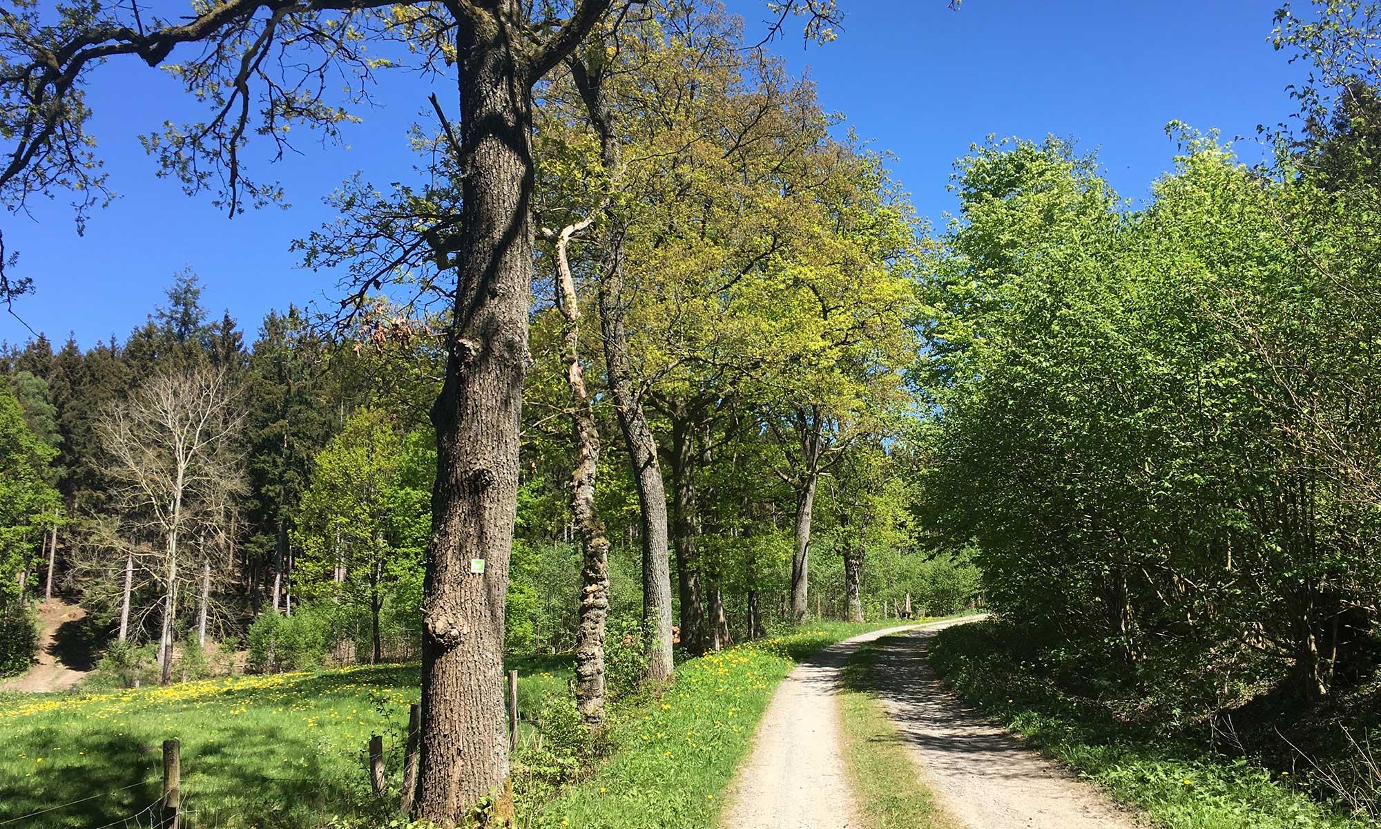 Sauerländer Waldroute Hirschberg Dimbruch