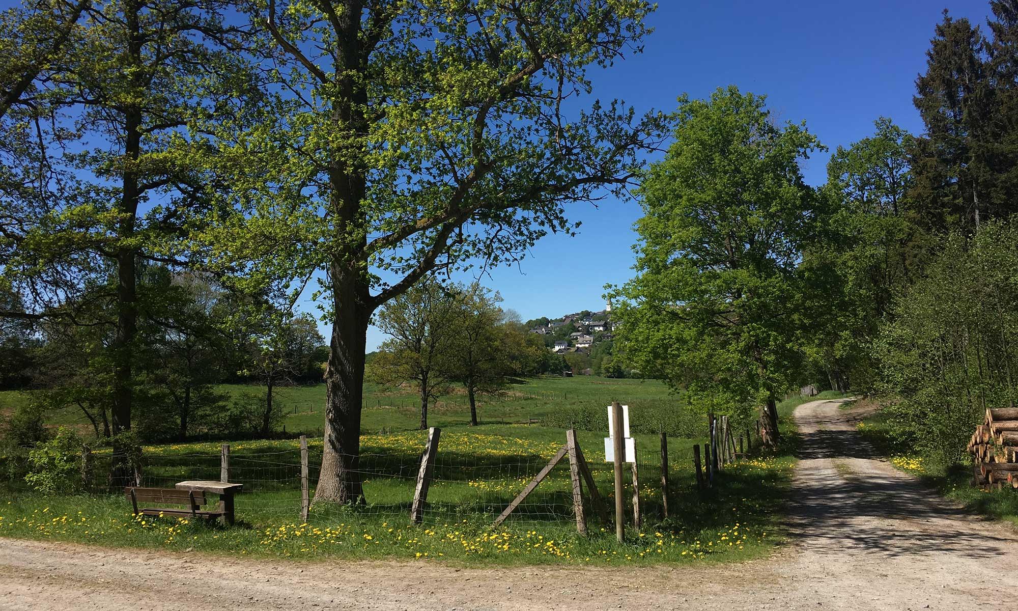 Sauerländer Waldroute Hirschberg Dimbruch Panorama