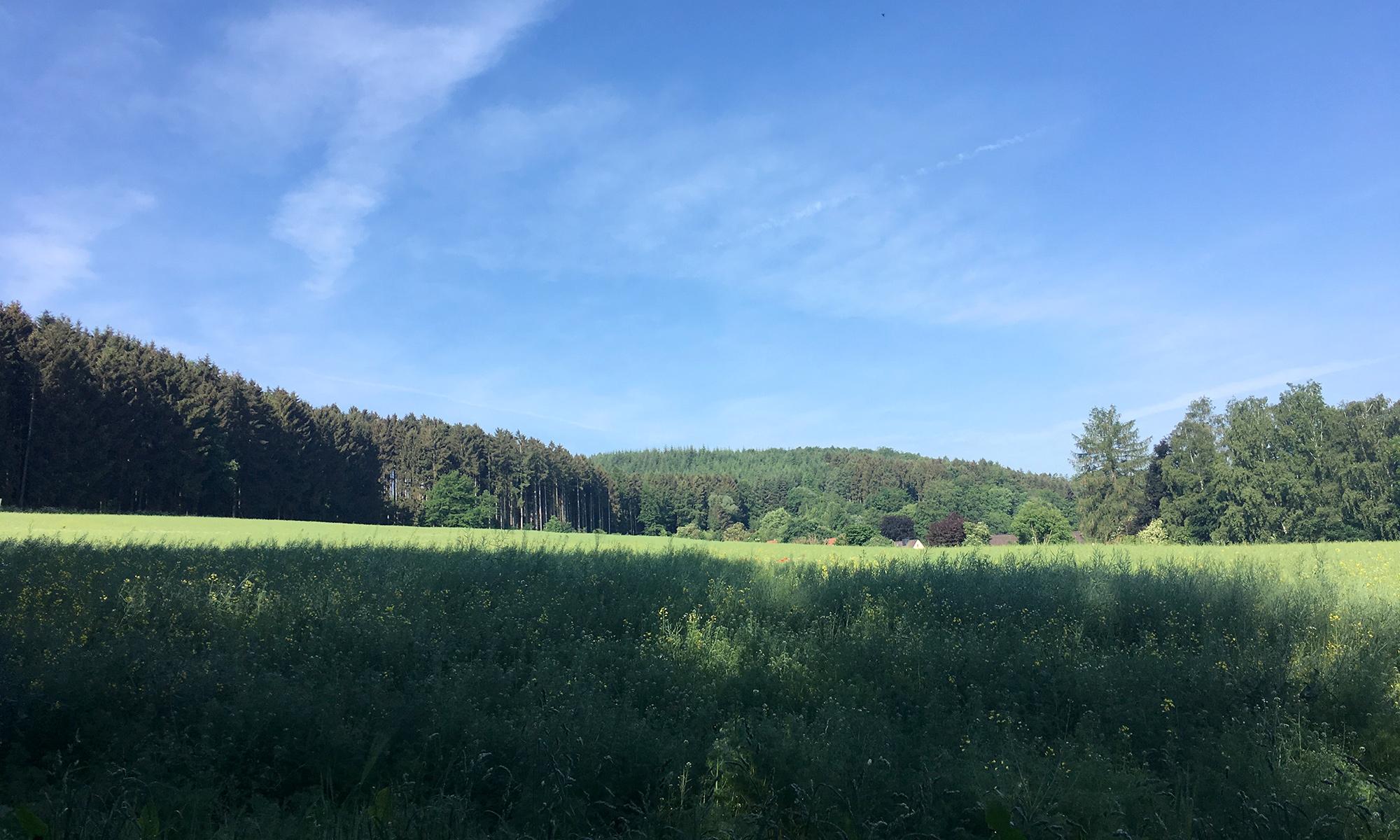 Waldrand in Hüingsen