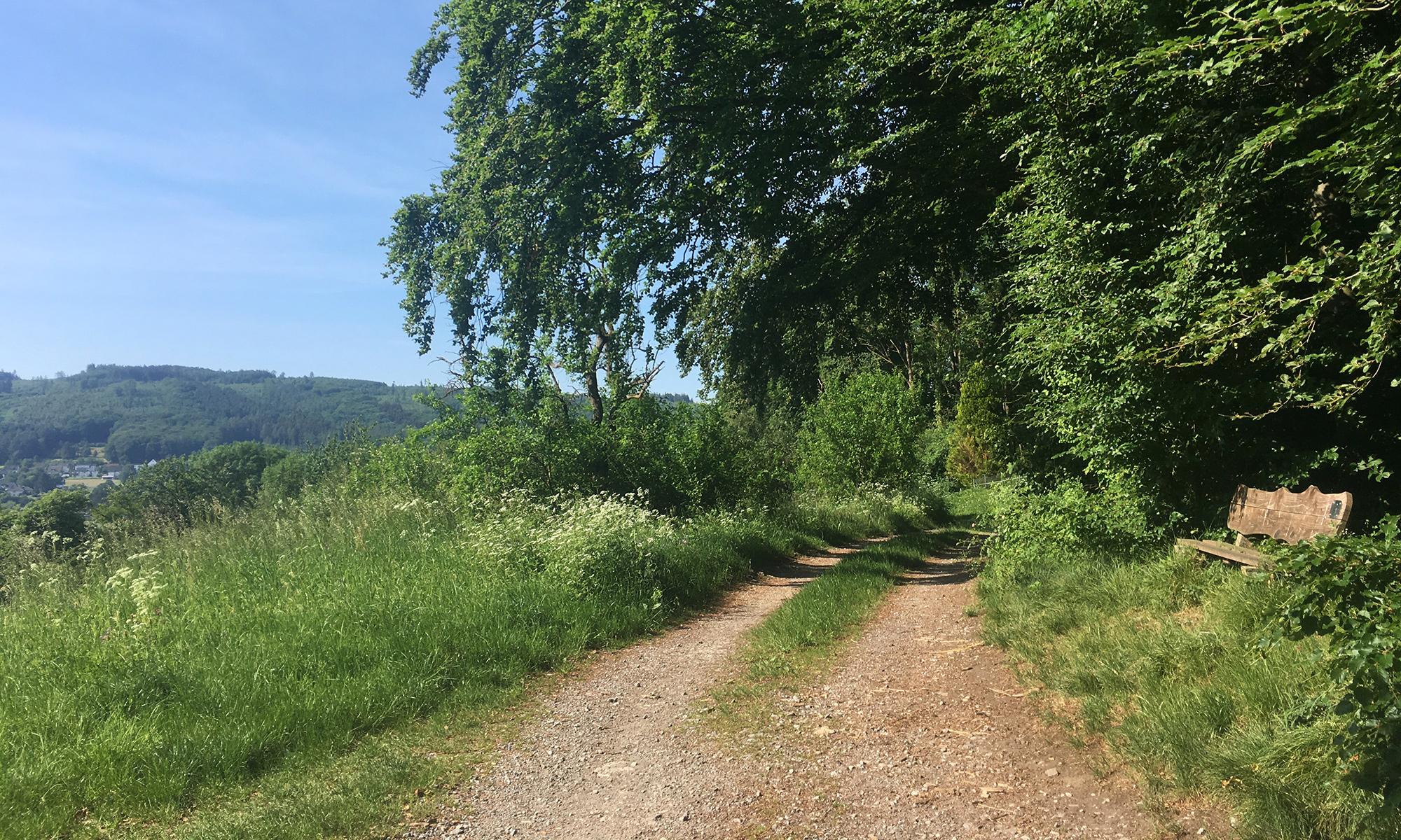 Waldrand Weg vor Riemke