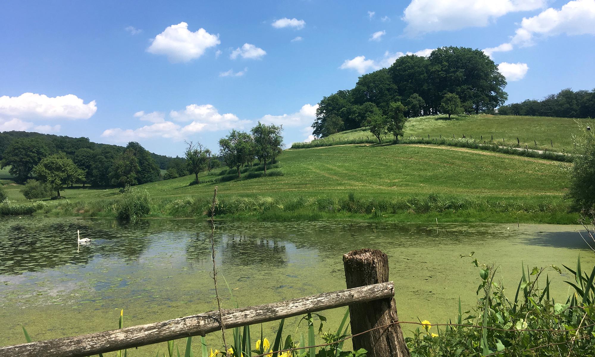 Teich an der Melscher Mühle