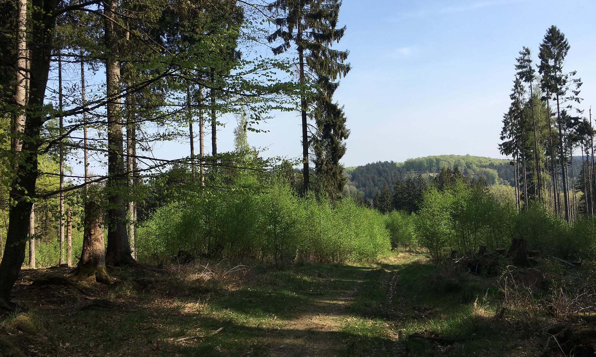 Arnsberger Wald