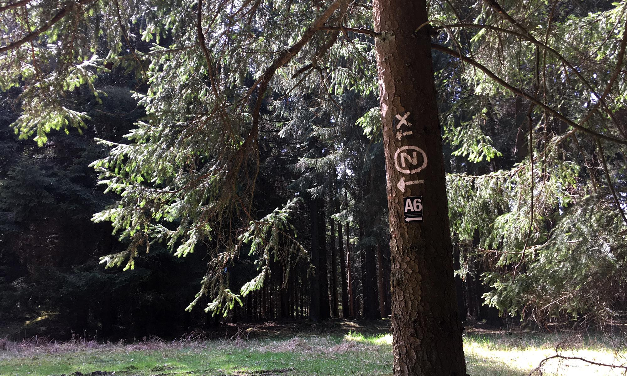 Baum mit Wegmarkierung