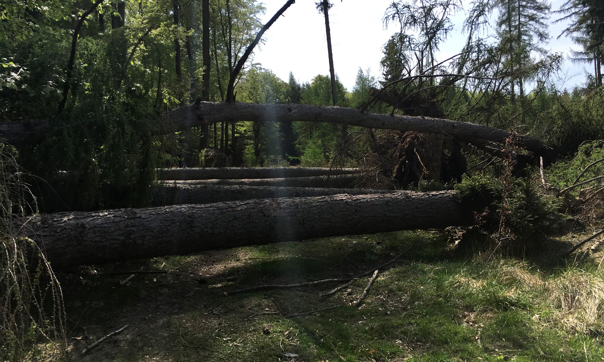 Baumtämme auf dem Weg