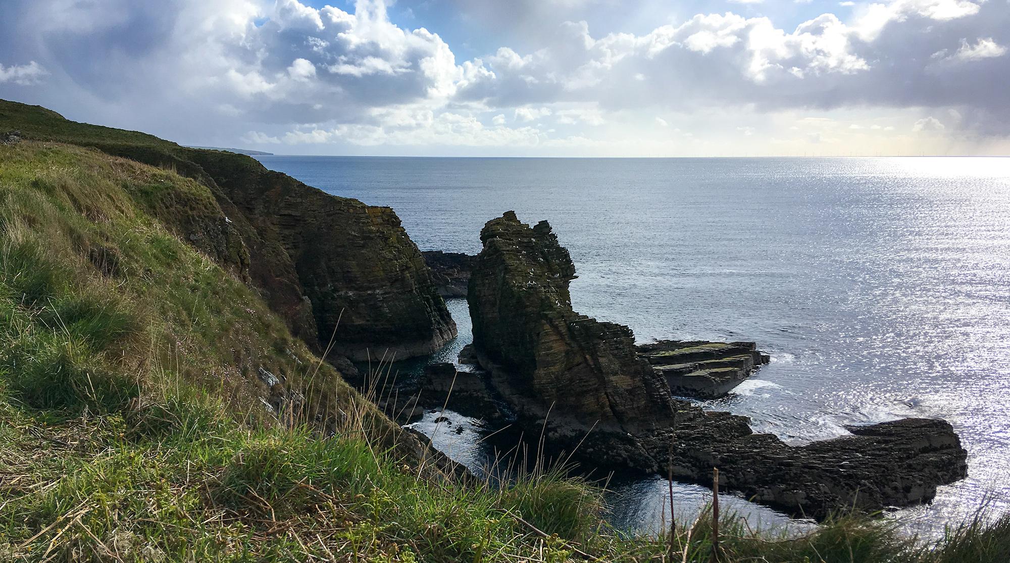 Möwenkollonie auf einem Felsen am Meer bei Dunbeath