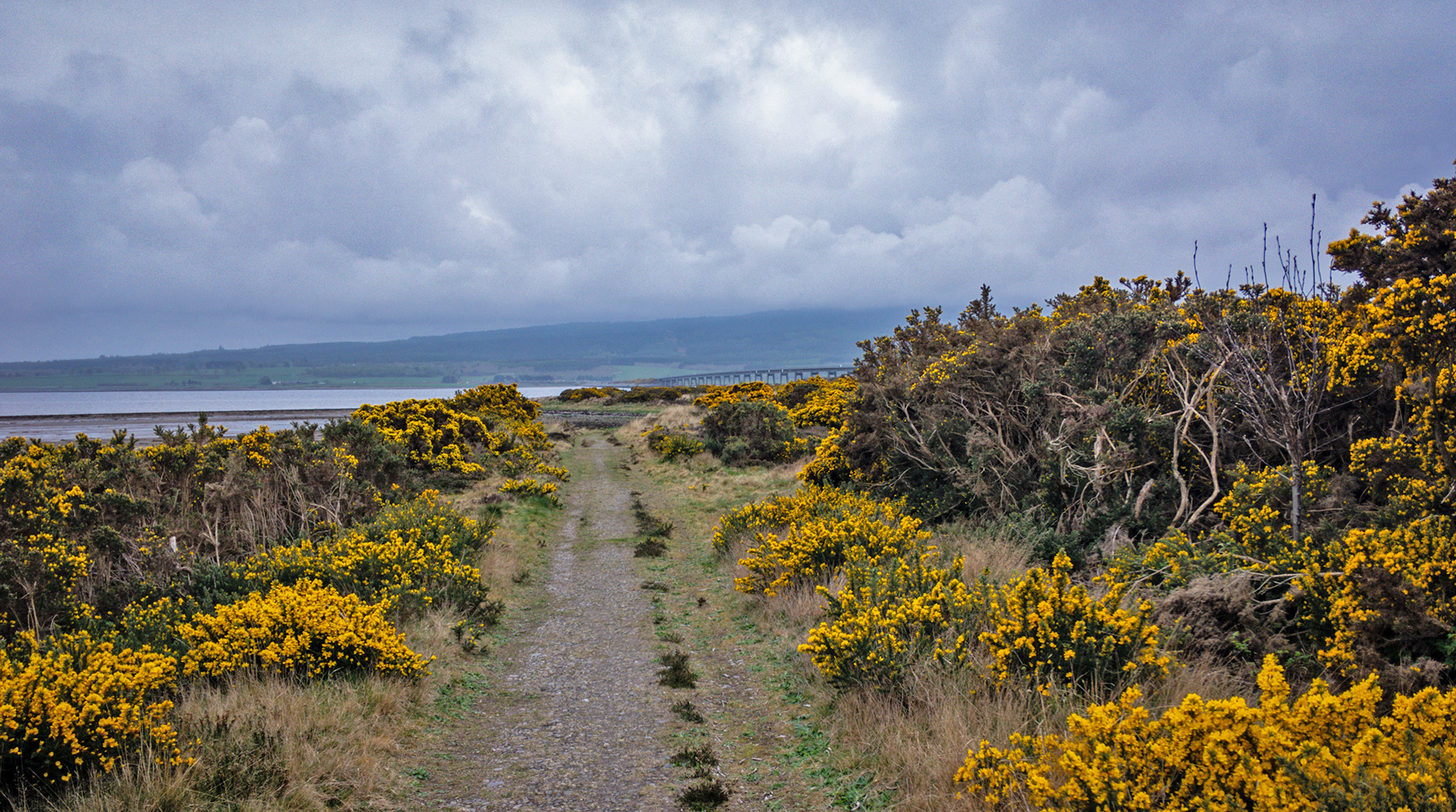 John o'Groats Trail and Gorse