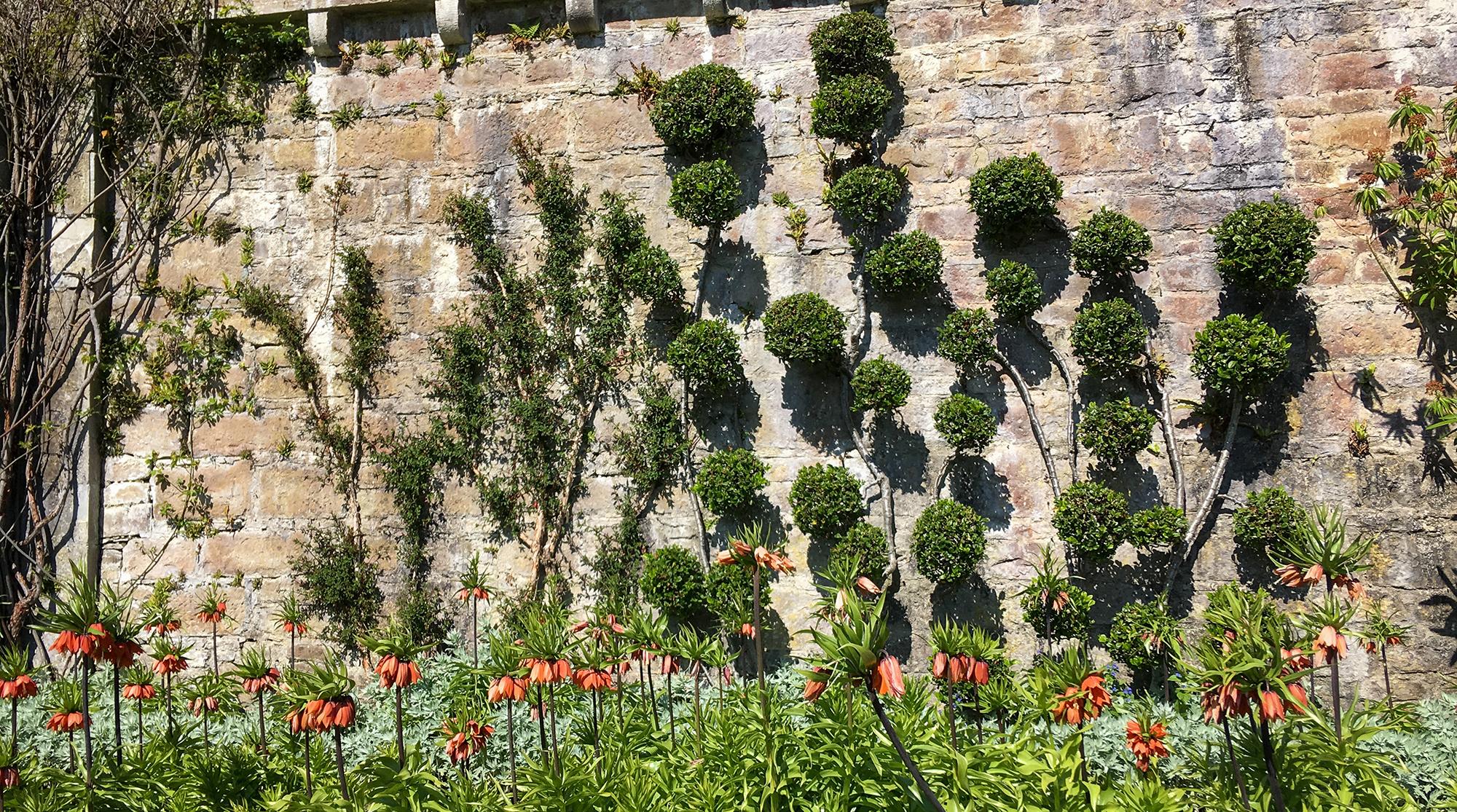 Steinmauer mit Kugeln aus Buchsbaum und davor eine Reihe Kaiserkronen